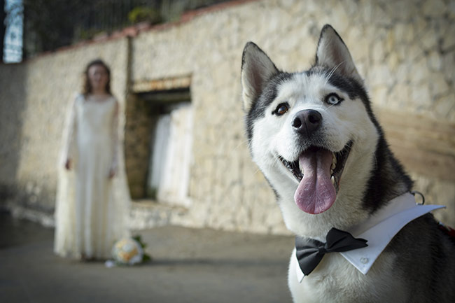 blog-matrimonio_dog-sitter-nozze_01